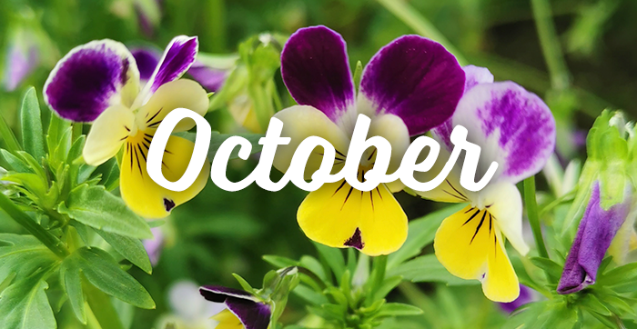 October Plant of the Month